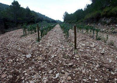 Terroir and Microclimate Clay soils LesValls