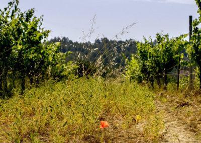Terroir and Microclimate pares balta organic vineyards penedes 1024x400